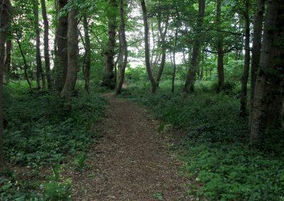 Listowel-Park-Woodland-Area